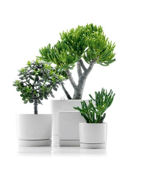flowering shrubs for pots maceteros para oficinas macetas jardineras y maceteros
