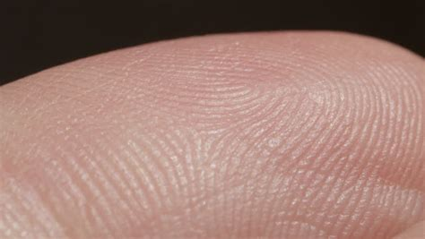 pores on human skin macro up of caucasian skin with holls stock photo royalty free image up macro detail of fingerprint on caucasian index finger white person s skin