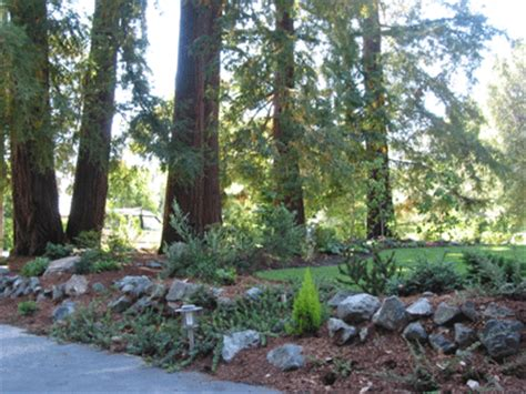 Redwood Gardens by Redwoods Plant Community California Garden Foundation