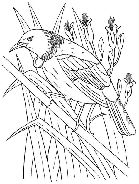 free coloring pages of nz native bird