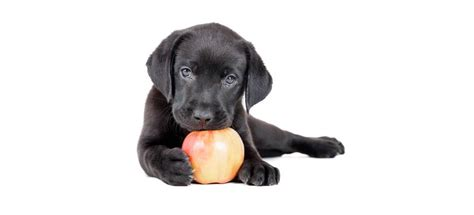 can my eat apples can dogs eat apples