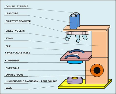 what is a light microscope used for light microscope microscopes and microscopy