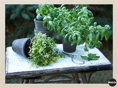 windowsill herb garden windowsill herb garden diy crafts