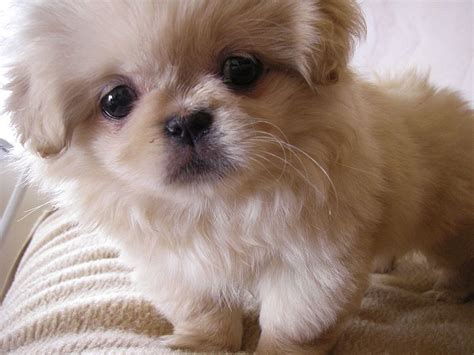 cutest puppies puppy dogs enjoys