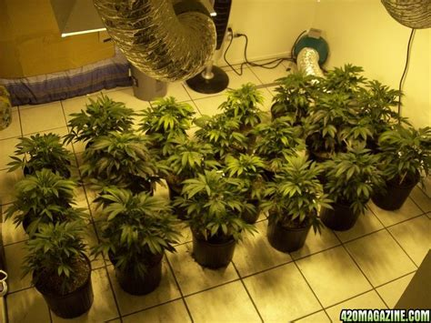 how to grow a plant in my room 2000 watt 20 plant indoor my grow advice welcomed 420 magazine
