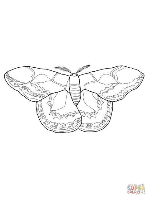 moth coloring pages kidsuki