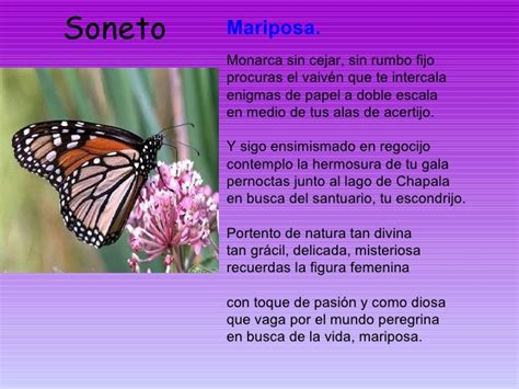 poesias y adivinanzas de mariposas leyendo leyendo disfruto y rimas de mariposas rimas y poesias leyendo leyendo