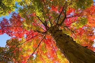 autumn tree quotes quotesgram