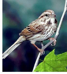bill s birds