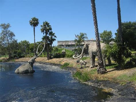 the labrea tar pits picture of california united states
