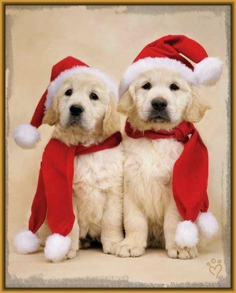 ver fotos para navidad imagenes de perritos en navidad para descargar imagenes de cachorros