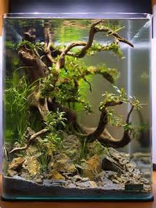 1000  ideas about Aquarium Design on Pinterest   Aquarium, Aquascaping