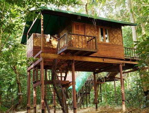 our jungle house starlight treehouse billede af our jungle house khao sok national park tripadvisor