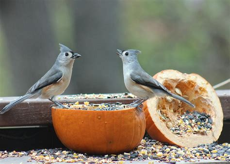 what are they doing with all those seeds feederwatch