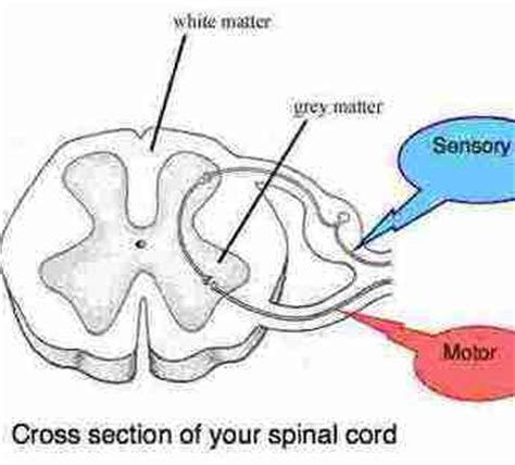 spinal cross section tingling in arms and hands and legs should not be ignored