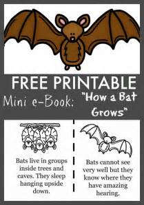 why time flies a mostly scientific investigation books best 25 bats for ideas on bat activities