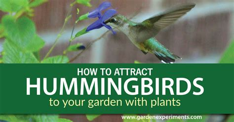recipes for hummingbird feeders best hummingbird feeder