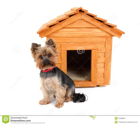 small wood dog house small dog with wooden dog s house stock photo image 31568840