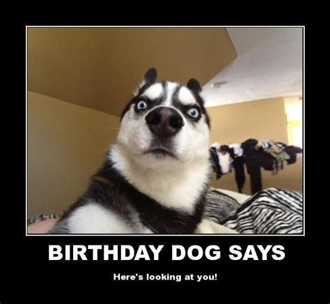Funny Birthday Memes - funny animal meme happy birthday