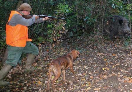 atc pavia caccia pavia lite tra cacciatori e guardiacaccia per