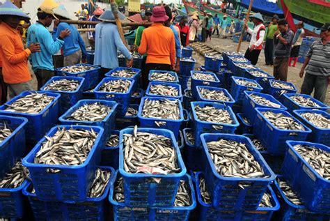 Keranjang Ikan pasokan kurang harga ikan laut di palabuhanratu naik republika