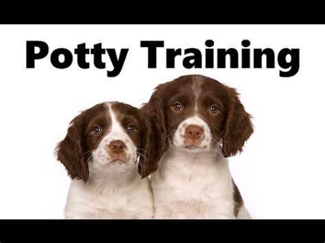 how to potty a house springer spaniel speed drawing funnydog tv