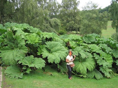 jardines ingleses chartwell viaje a visitar jardines ingleses