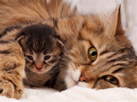 bis wann bekommt bafã g wenn katzenbabys zu fr 252 h abgegeben werden probleme