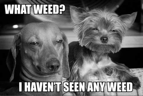 Funny Memes About Weed - welcome to memespp com
