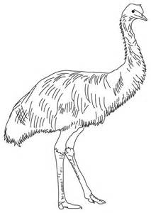 emus colouring pages
