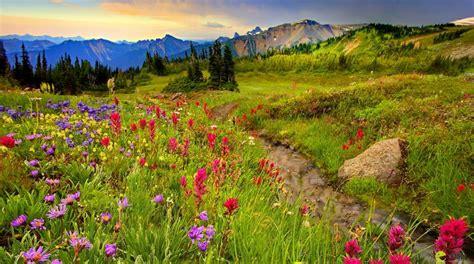 mountain meadow picture beautiful mountain meadow