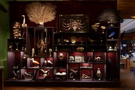 Le Cabinet De Curiosité by Cabinet De Curiosit 233 S C 244 T 233 Jardin