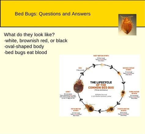do bed bugs feed every night bedbugs and cockroaches