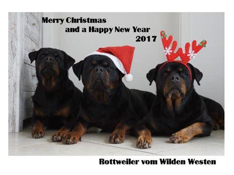 ztp new year rottweiler vom wilden westen buffy vom wilden westen