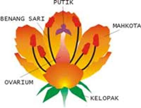 bagian bagian bunga beserta gambar  keterangannya