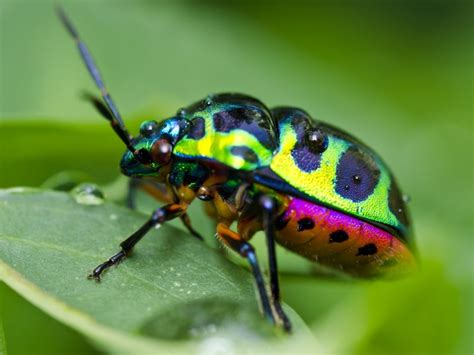 colorful bugs colorful insect