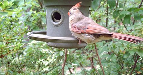 attracting backyard birds attracting backyard birds hometalk