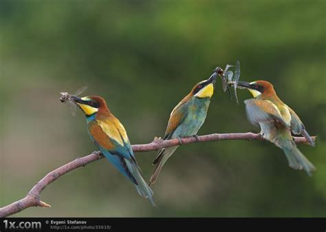 funny image collection bird photography those amazing