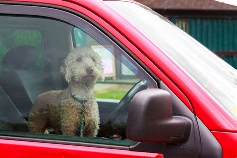 leaving in car stores help tackle the problem of dogs in cars mnn nature network