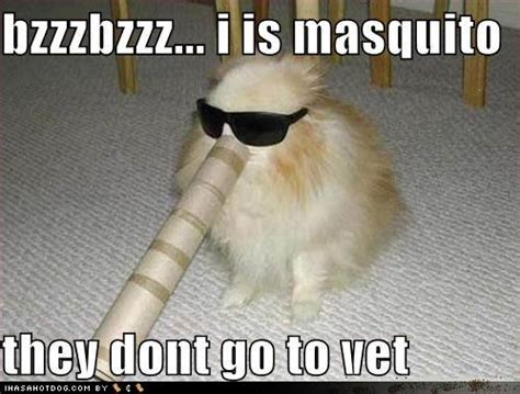 Silly Dog Meme - funny pomeranian dogs new images pictures 2012 all funny