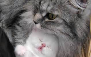 pictures of beautiful cats and kittens pictures of