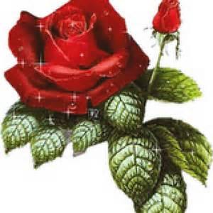 Red Photo Album Rože Povečava Foto 17649751
