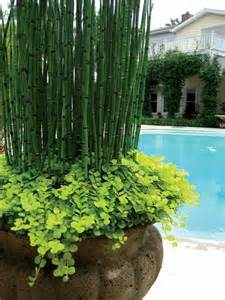 best 25 plants around pool ideas on
