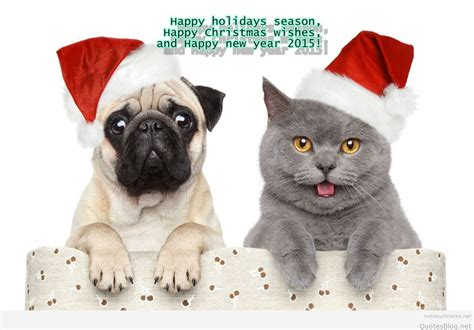 new year animals animals happy new year wallpapers images 2016