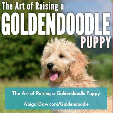 goldendoodle puppy books 43 best quotes sayings images on
