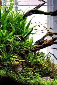 aquarium aquascaping ideas 25 best aquascaping ideas on aquarium