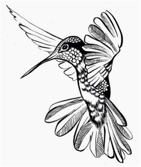 hummingbird outline tattoo 23 best hummingbird outline images on