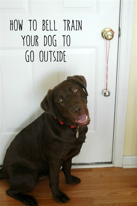 a puppy to outside how to bell your to go outside endlessly inspired