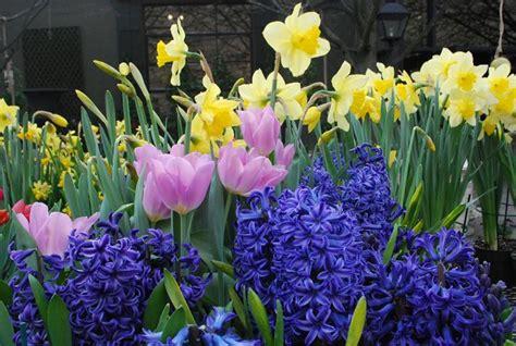 fiori con bulbo fiori in bulbo bulbi caratteristiche dei fiori in bulbo
