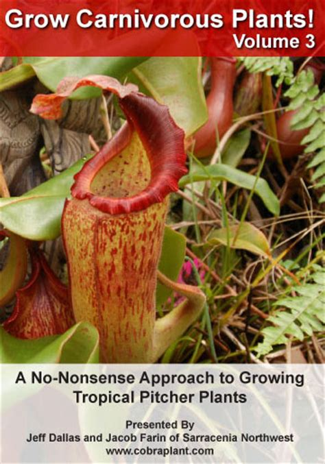 hardy sundew care guide carnivorous plants for sale